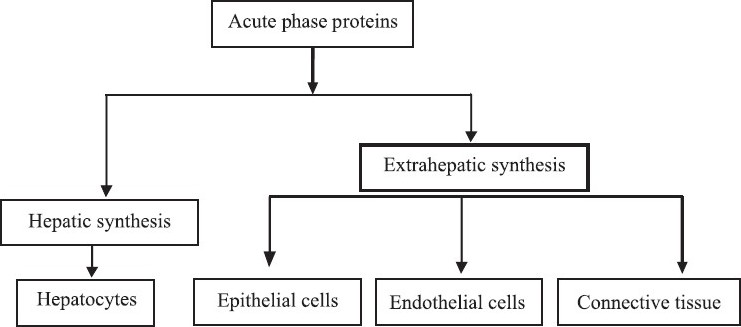 Acute Phase Proteins