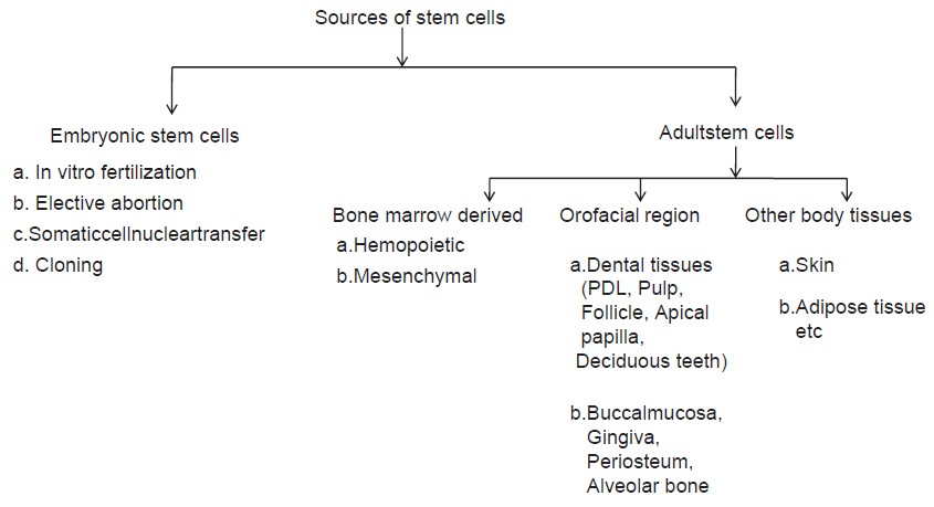 Stem cell research essay outline