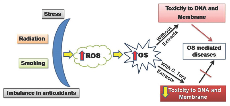 Figure� 8: In the biological system, ROS are formed as a natural byproduct during normal metabolism. Environmental stress elevates ROS levels dramatically. This leads to significant damage to nucleic acids and cell structures. Plant as a source of novel drug candidate for protecting DNA and cell structure from oxidative damage. Natural bioactives present in the <i>C. tora</i> extracts acts through several mechanisms to quench free radicals. Extracts exhibited antioxidant properties and also protected DNA and cell membrane from oxidative damage