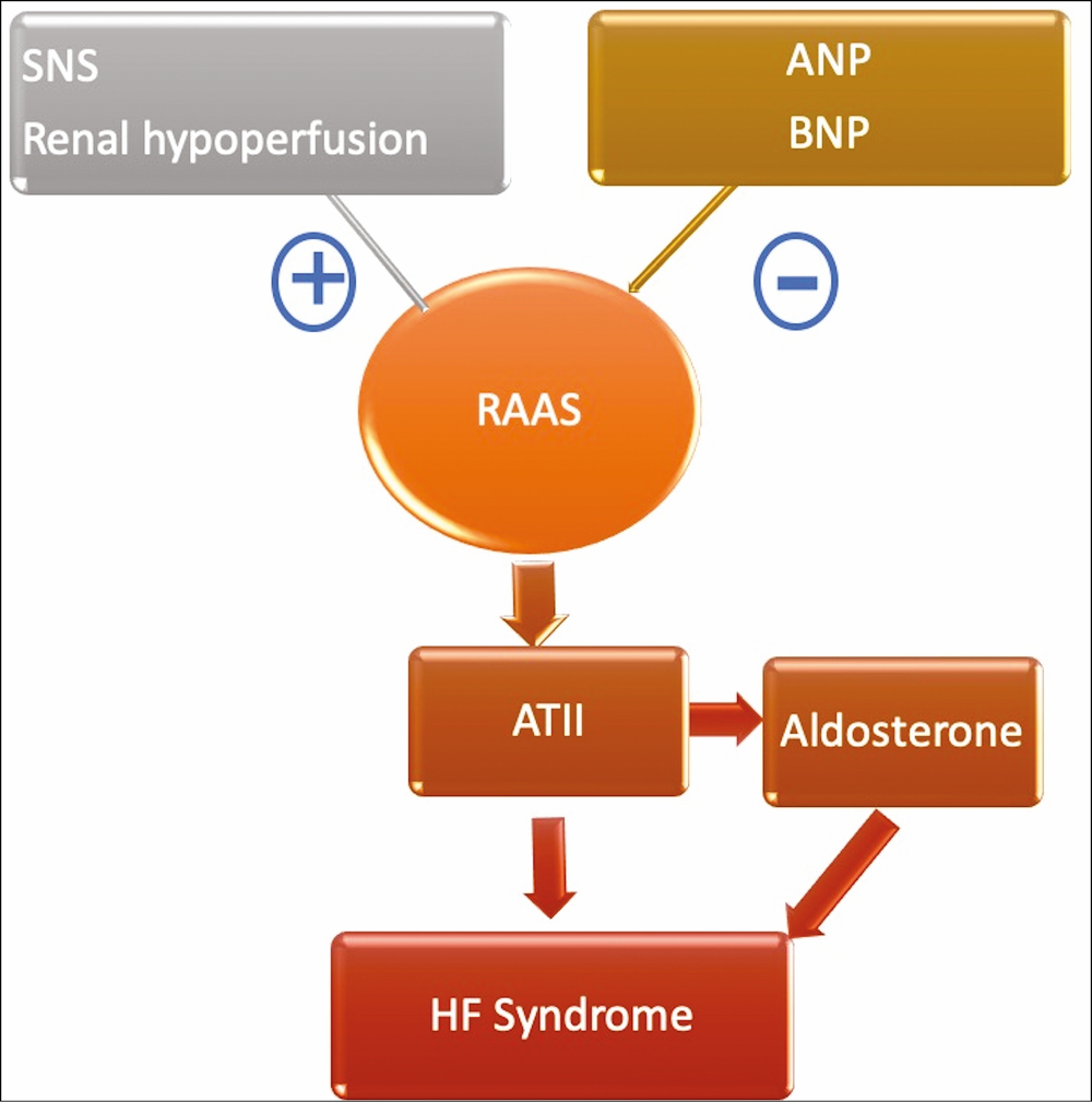 Figure 1: Heart failure syndrome resulting from angiotensin II: the key product of RAAS cascade.
